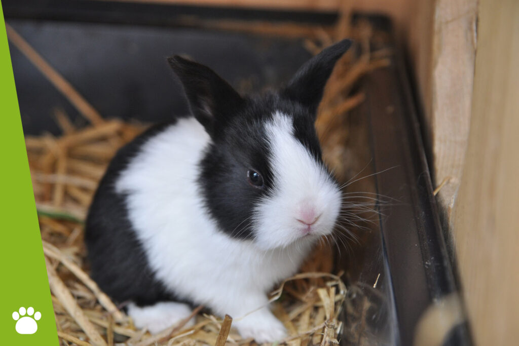 Jak przygotować klatkę dla królika?