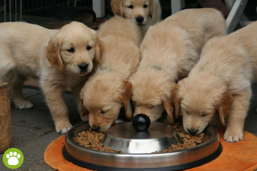 Karmienie psa tylko suchą karmą