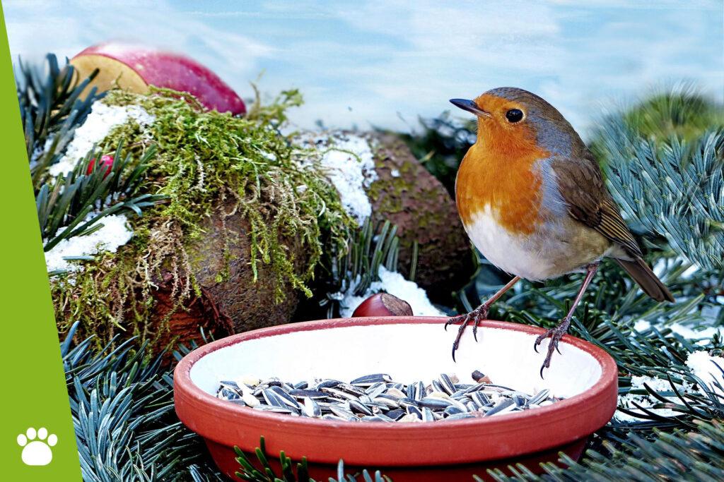 Czym dokarmiać ptaki zimą?