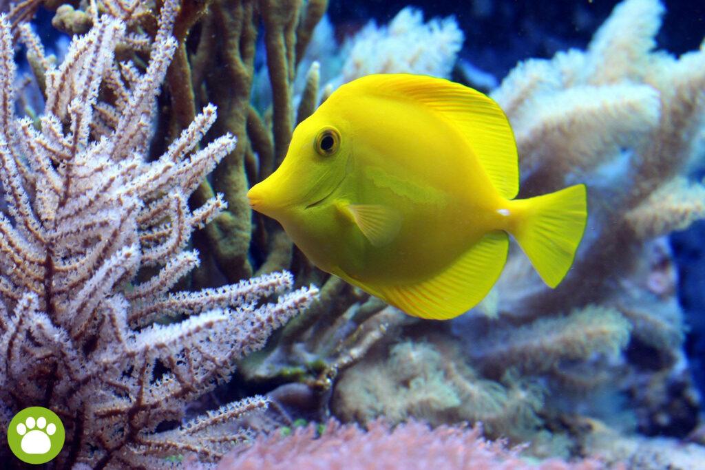 Jak często karmić rybki?
