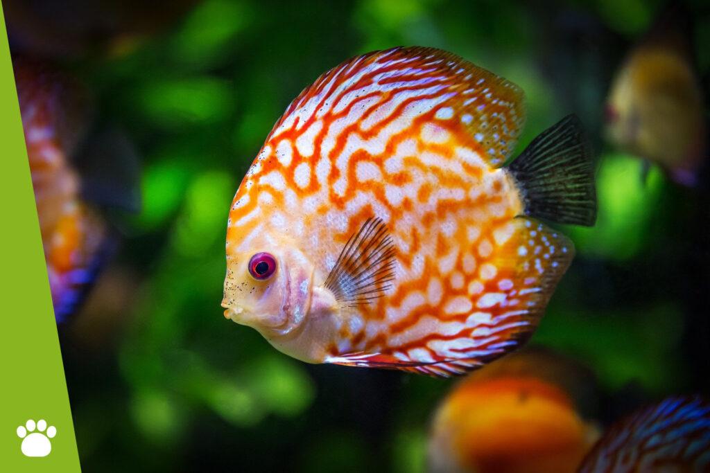 Jak karmić rybki w akwarium?