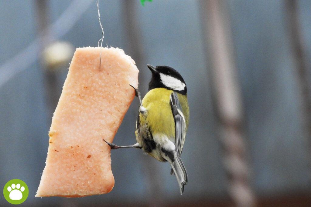 Karma dla ptaków na zimę