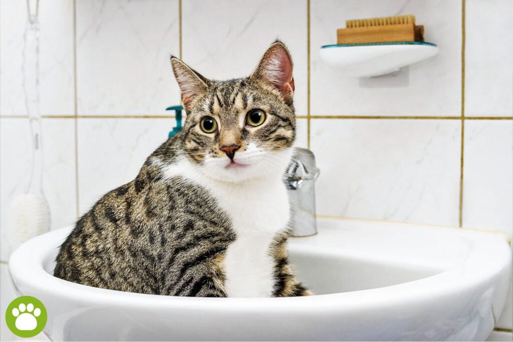 Jak zachęcić kota do korzystania z kuwety?