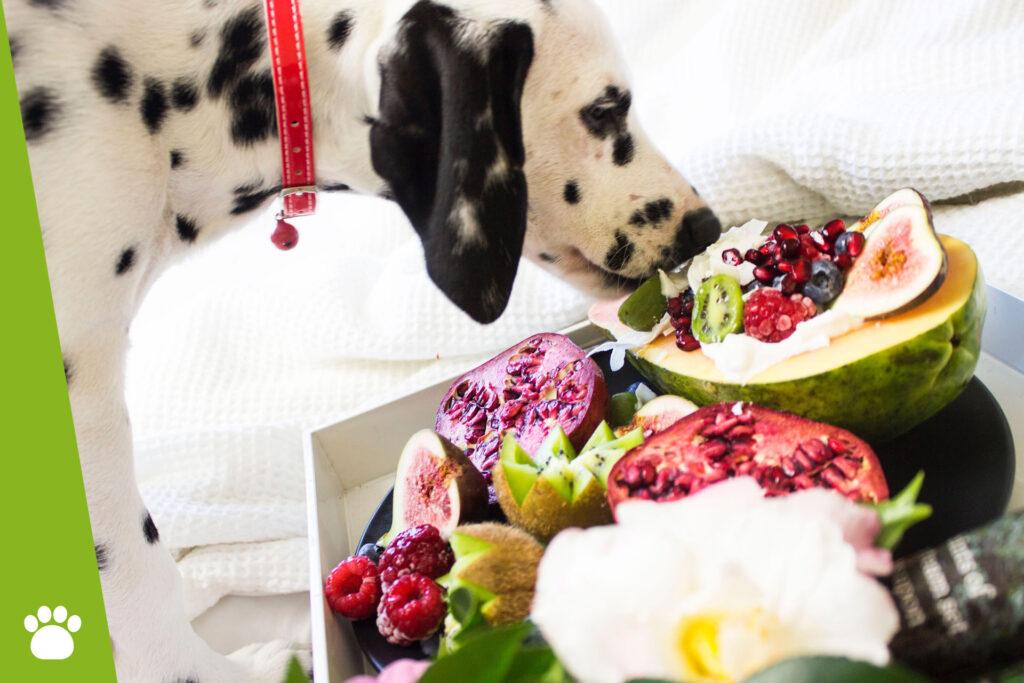Jakie warzywa i owoce może jeść pies?
