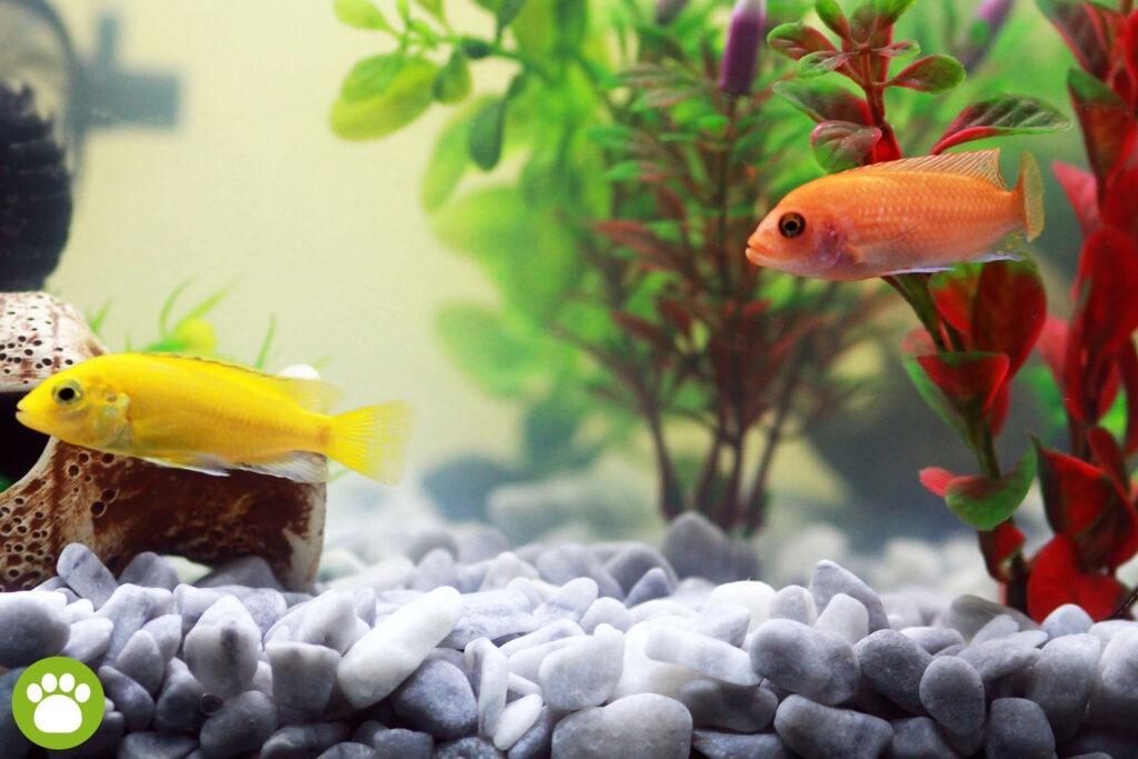 Jak przygotować wodę do akwarium?