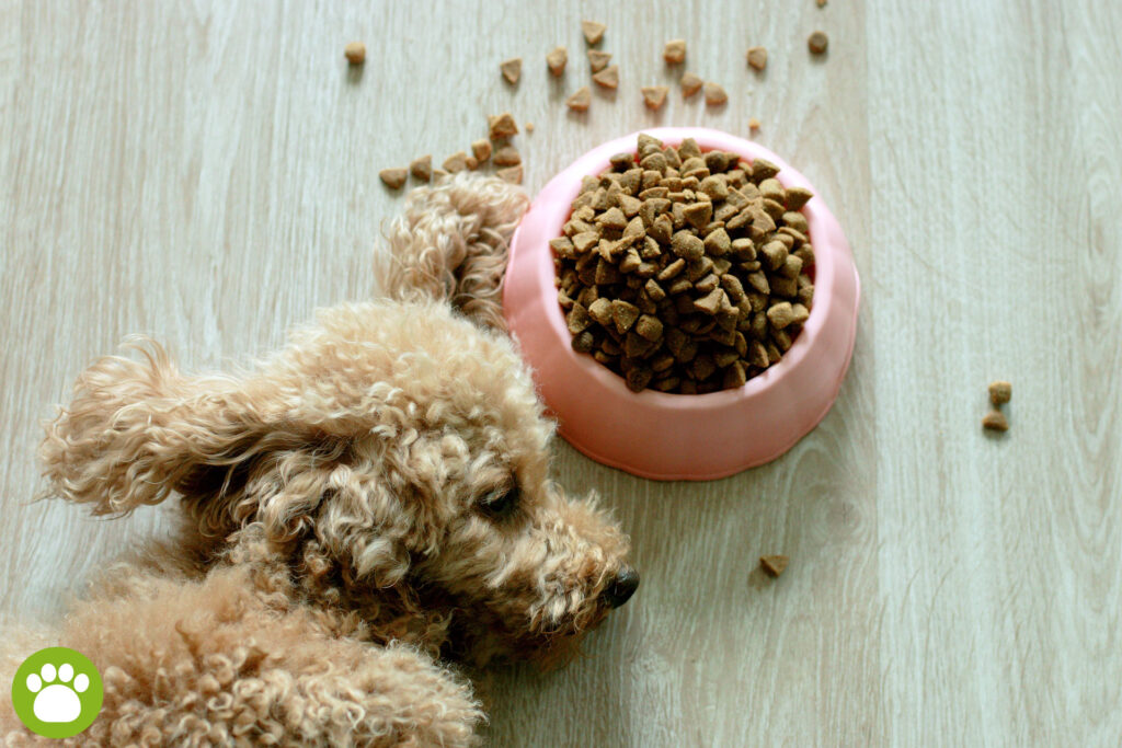 Ile kosztuje miska dla psa?
