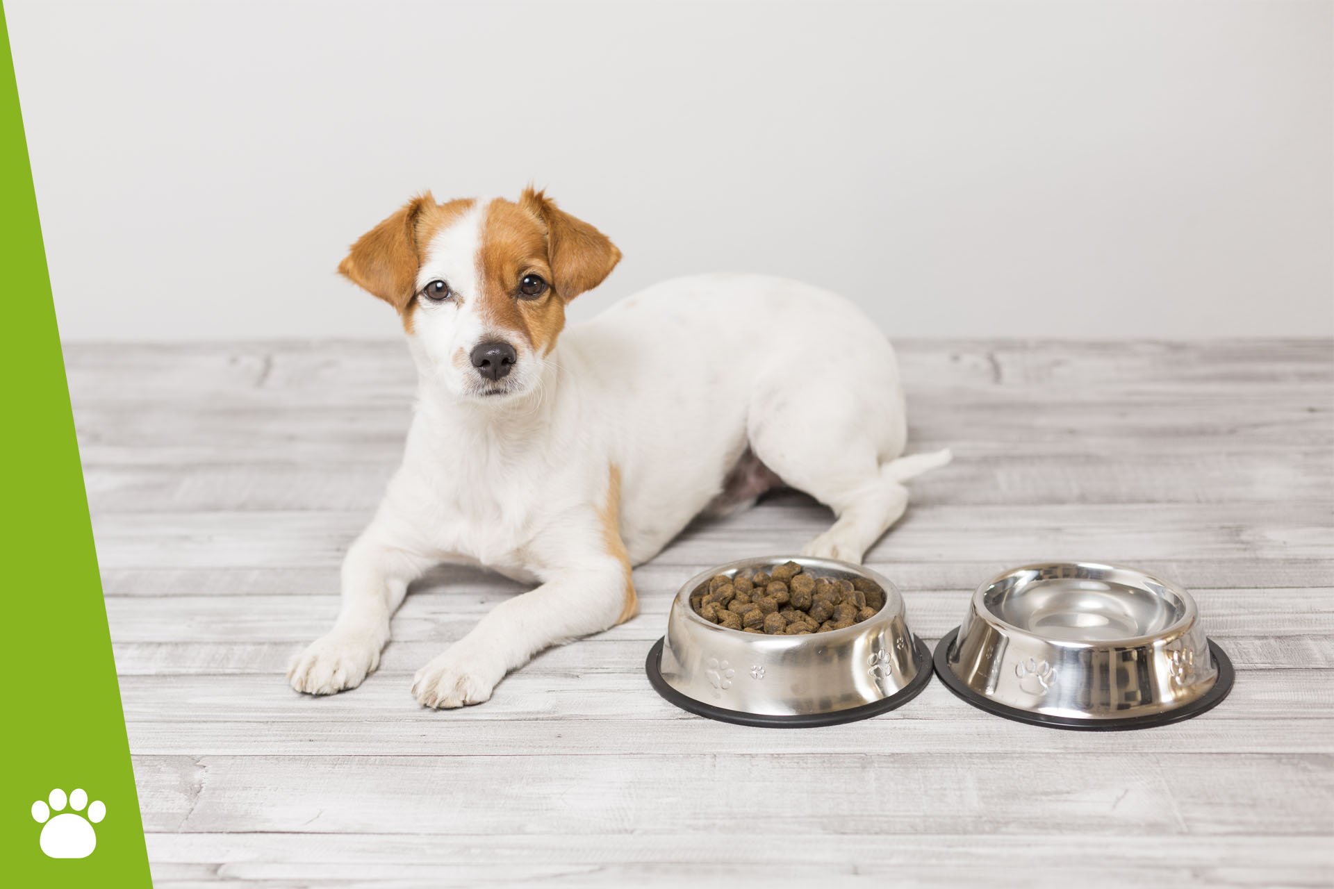 Jaka miska dla psa?