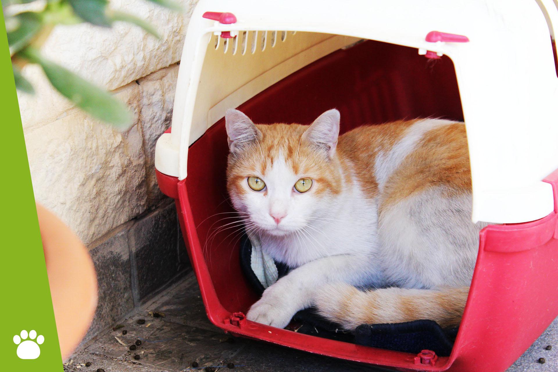 Jaki transporter dla kota wybrać?