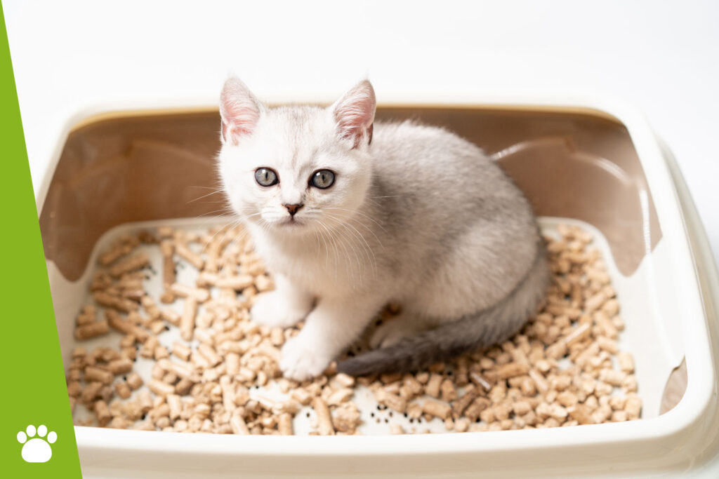 Jaki żwirek dla kota jest najlepszy?