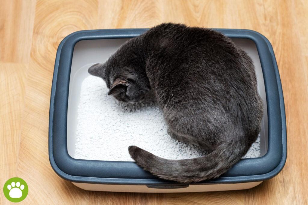 Jaki żwirek dla kota żeby nie śmierdziało?