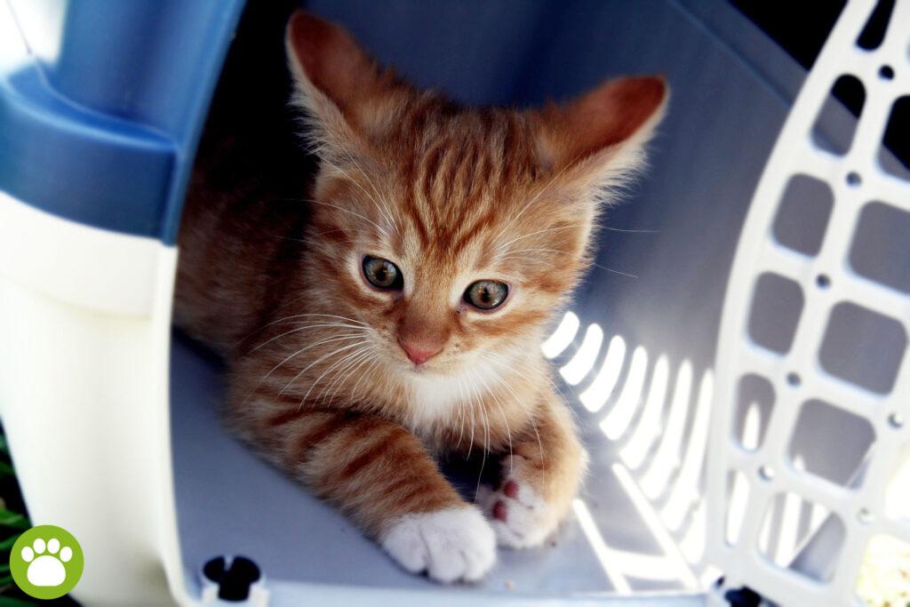 Jaki jest najlepszy transporter dla kota?