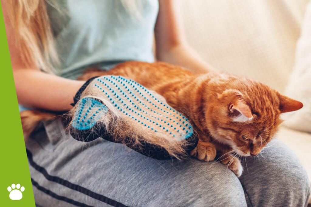 Co zrobić, żeby kotu nie wypadała sierść?