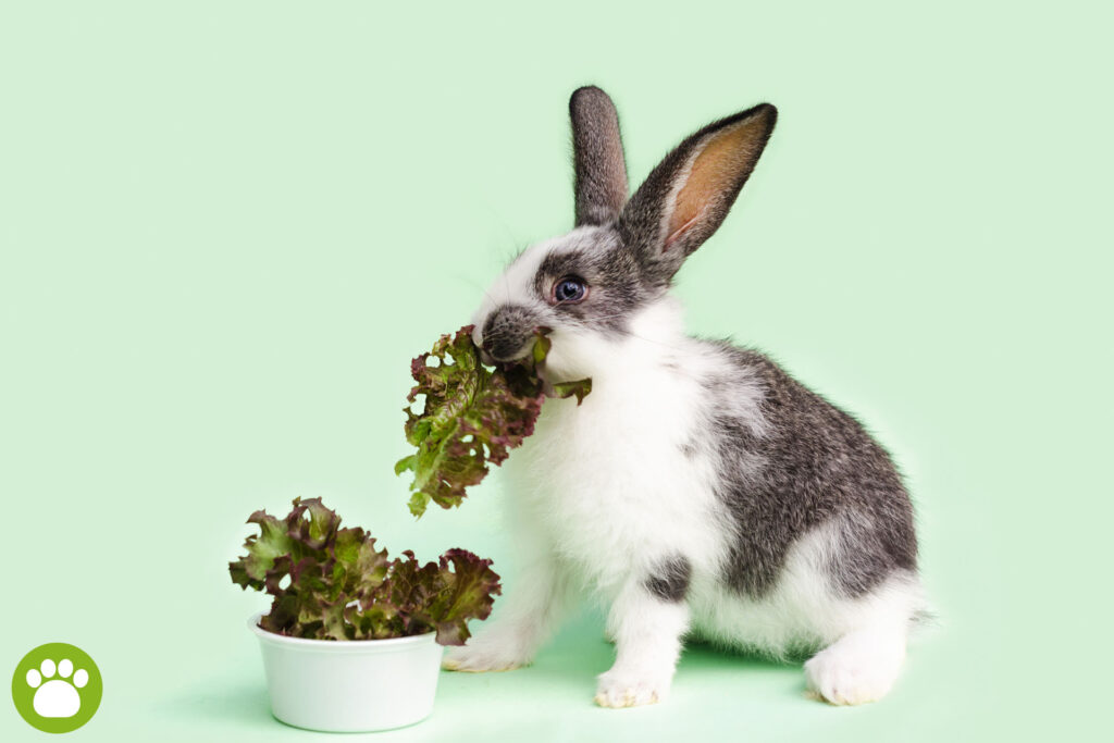 Co jedzą króliki miniaturki?