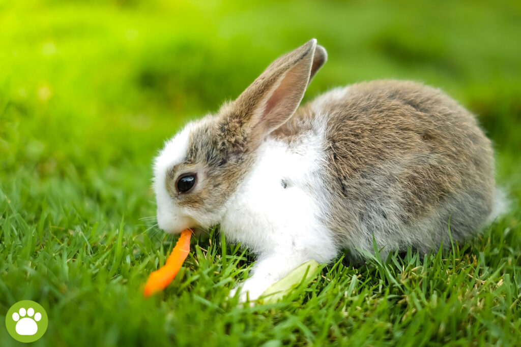 Jakie warzywa dla królika?