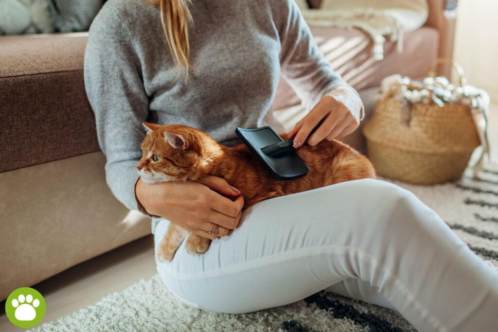 Jakie koty nie gubią sierści?