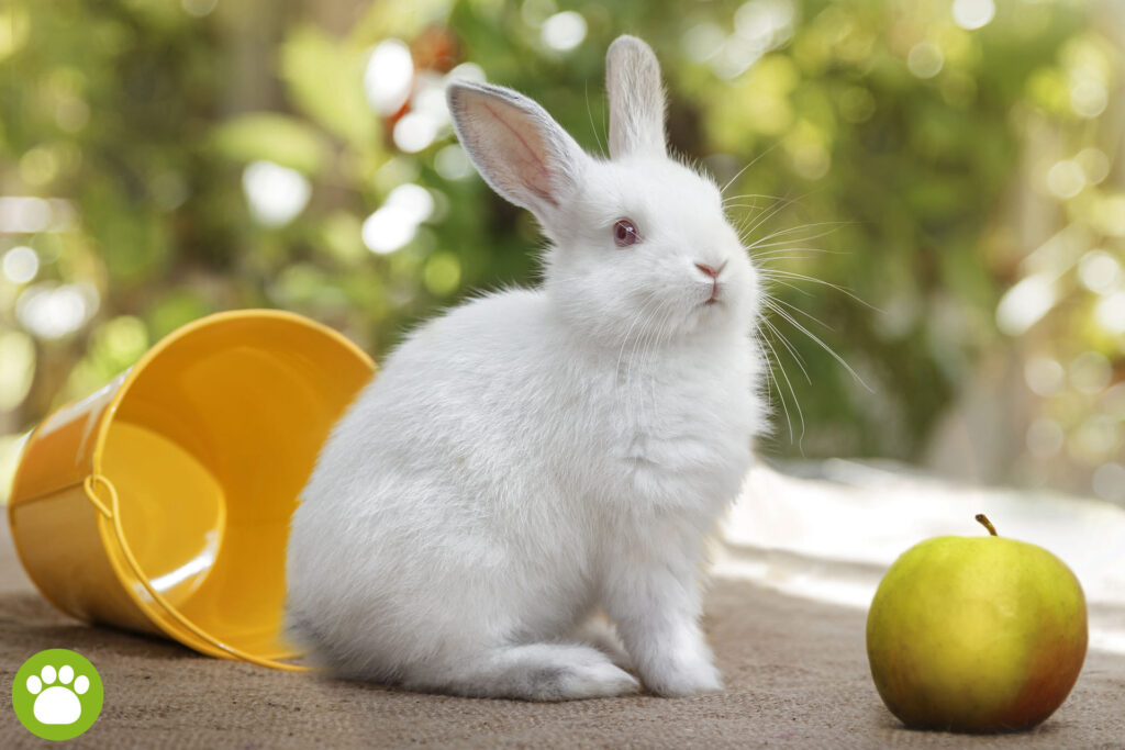 Jakie owoce jedzą króliki?