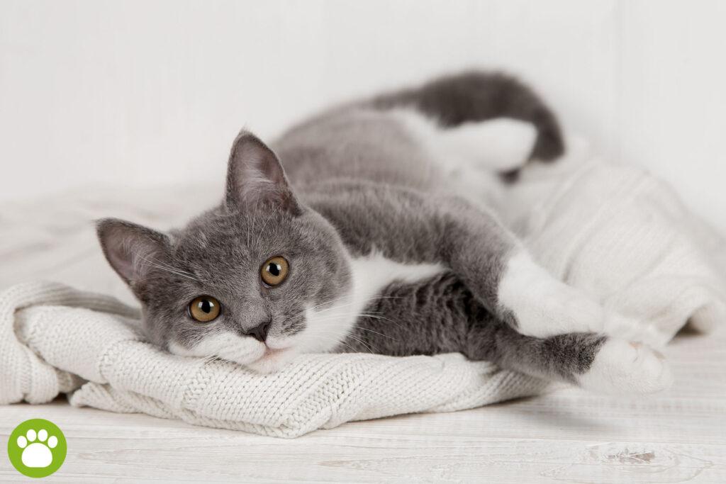 Dlaczego koty wymiotują?
