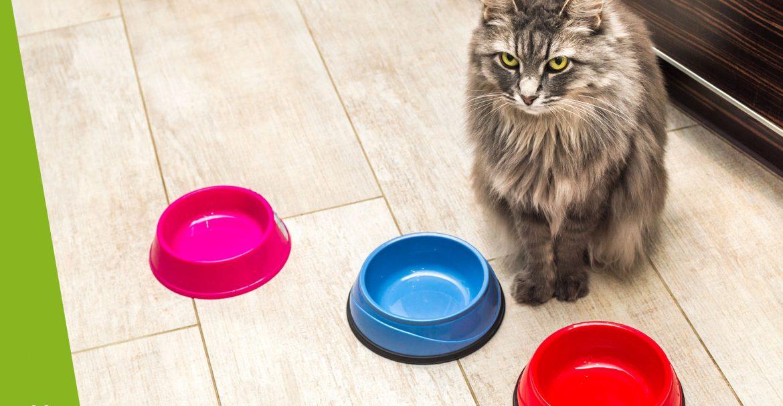 Dlaczego kot nie chce jeść?